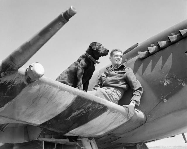 Wing_Commander_J_E_'Johnnie'_Johnson,_commanding_No._144_(Canadian)_Wing,_on_the_the_wing_of_his_Supermarine_Spitfire_Mk_IX_with_his_Labrador_retriever_Sally,_at_Bazenville,_Normandy,_31_July_1944._CL604